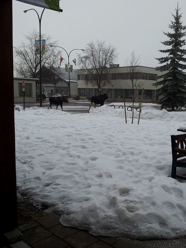 Just a regular day outside Smithers Public Library